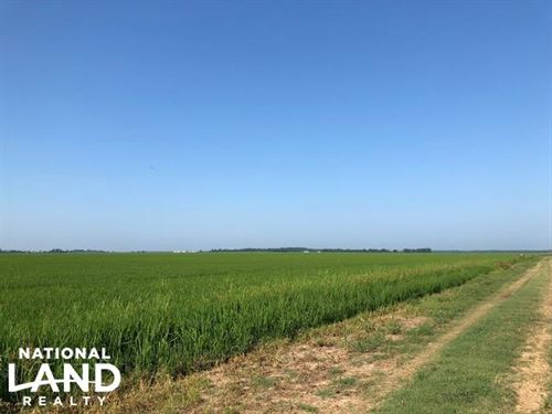 228 Acres Rice Farm & Duck Hunti : Newport : Jackson County : Arkansas