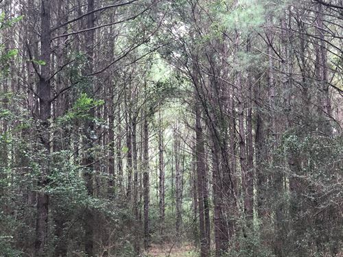 16 +/- Acres North Creek Rd : Opp : Covington County : Alabama