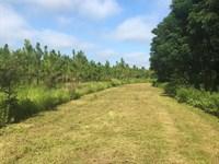 Crp Planted Pine Tract : Whigham : Grady County : Georgia