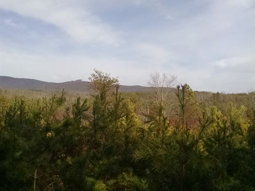 Great Rural Tree Farm : Rutherfordton : Rutherford County : North Carolina