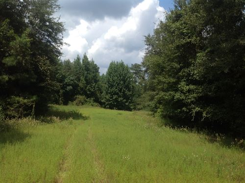 Timber & Hunting Land East Perry Co : Lawley : Perry County : Alabama
