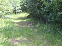 Timber, Hunting Investment Tract 20 : Petrey : Pike County : Alabama