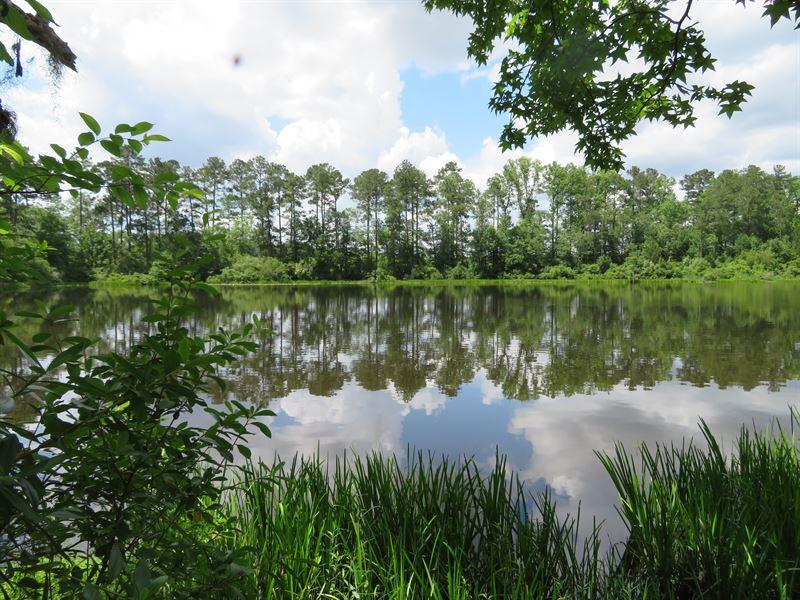 Great Hunting And Timber Tract : Greensboro : Gadsden County : Florida