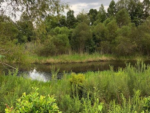 Grady Pond : Statesboro : Bulloch County : Georgia
