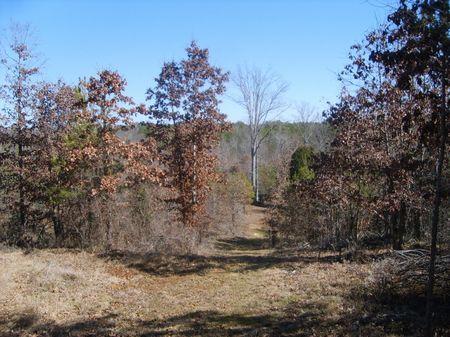 Hunting Land : Union : Union County : South Carolina