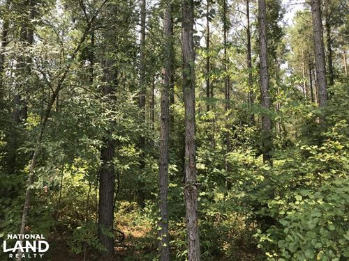 Remote Mature Pine : Maben : Clay County : Mississippi