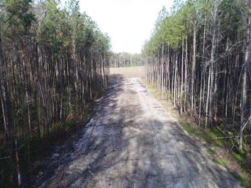 Harvey Tract : New Hope : Berkeley County : South Carolina