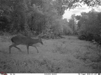 199.1 Acres of Recreational Hu : Witts Springs : Searcy County : Arkansas