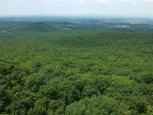 Absolute Auction - 383 Wooded Acres : Waynesboro : Augusta County : Virginia