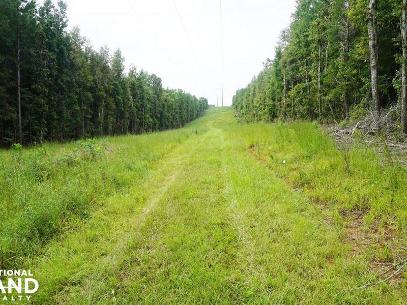 Colwell Creek Hunting & Timber Trac : Greensboro : Hale County : Alabama