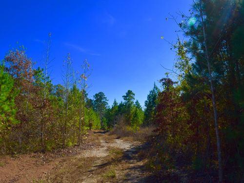 Deer Hunting Southwest Arkansas : Chidester : Ouachita County : Arkansas