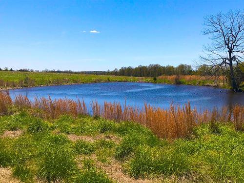 Arkansas Cattle / Recreational : Bradford : Jackson County : Arkansas