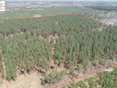 Mature Pine Plantation Timberland : El Dorado : Union County : Arkansas