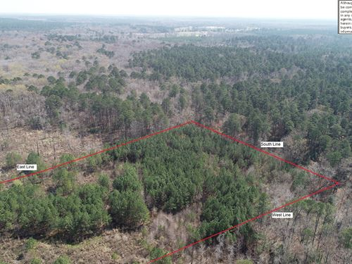 South Arkansas Wetland Timber Area : El Dorado : Union County : Arkansas