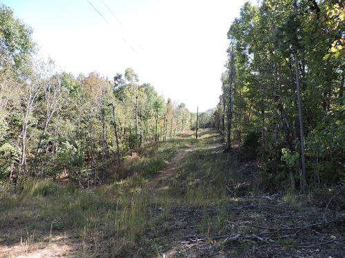 Wooded Timberland Property Buffalo : Jasper : Newton County : Arkansas