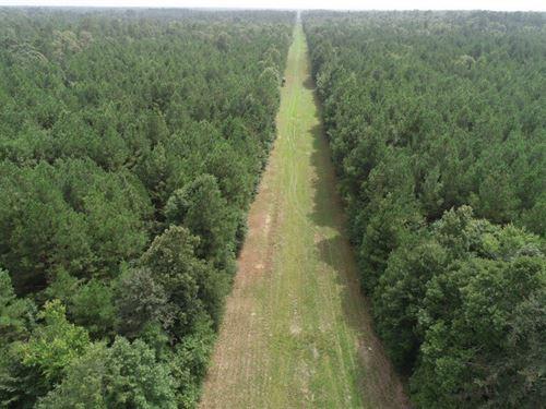 Young Pine Timber Land Calhoun : Hampton : Calhoun County : Arkansas