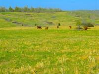 Ranch For Sale in Arkansas : Mammoth Spring : Fulton County : Arkansas