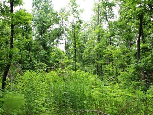 70.68 Acre Hunting Tract Mt, View : Mountain View : Stone County : Arkansas