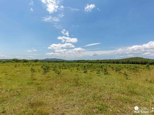 Building Site With Mountain Views : Oden : Montgomery County : Arkansas