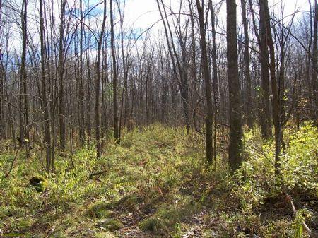 Large Acreage Hunting Land : Sullivan : Madison County : New York