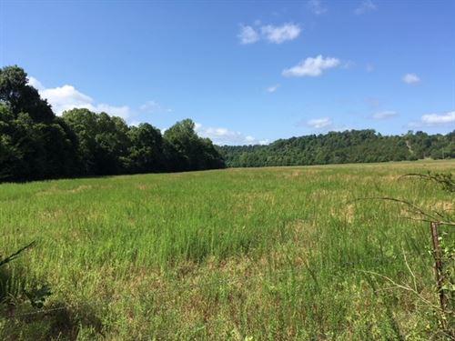 Arkansas Ozarks Cattle Farm, Viola : Viola : Fulton County : Arkansas