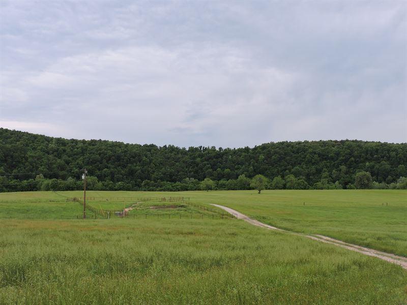 Cattle Horse Farm Ranch Arkansas : Yellville : Marion County : Arkansas