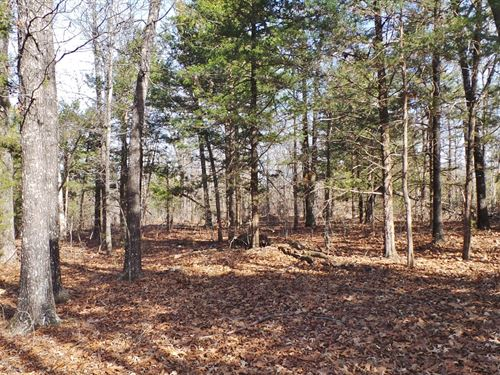 Wooded Property In The Ozarks : Yellville : Marion County : Arkansas