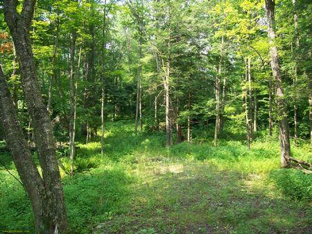 24 Acres 4 Season Recreation : Florence : Oneida County : New York