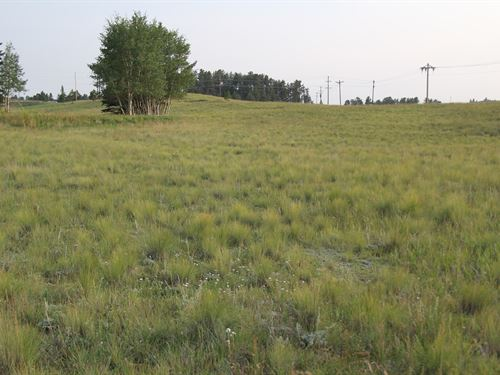 Recreational 8 Acres Colorado : Florissant : Teller County : Colorado