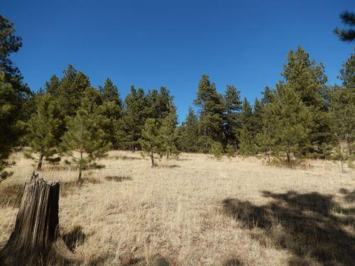 Colorado Mountain Land Well Fishing : Florissant : Teller County : Colorado