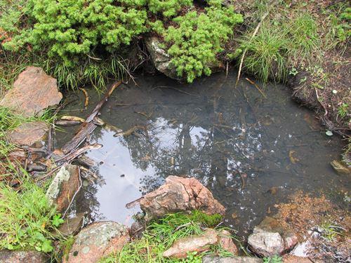 Colorado Springs Area Mountain : Cripple Creek : Teller County : Colorado