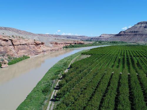 Income Potential Orchard River : Delta : Colorado