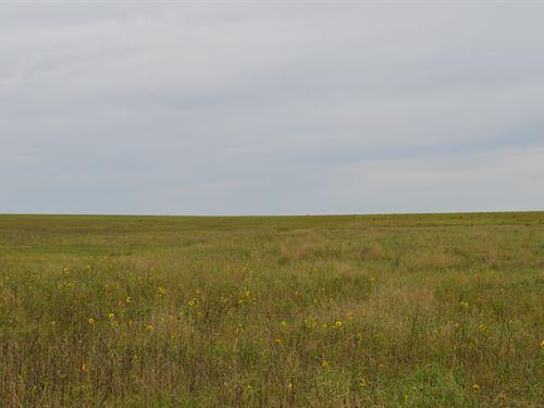 Cheyenne County Colorado Crp : Wild Horse : Cheyenne County : Colorado