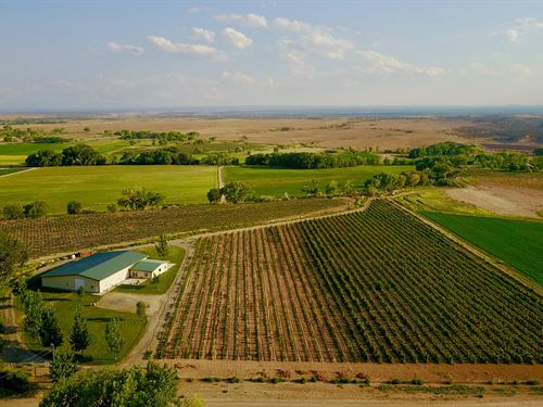 Western Colorado Ranch, Vineyard : Olathe : Montrose County : Colorado
