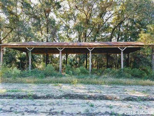 Great Farmland Alachua County : Alachua : Florida
