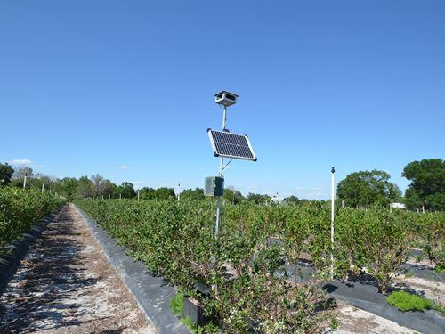 Certified Blueberry Farm : Arcadia : Desoto County : Florida