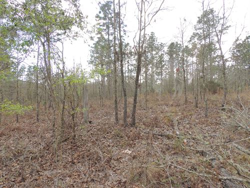 Vacant Land, Bell, Fl, Rural : Bell : Gilchrist County : Florida
