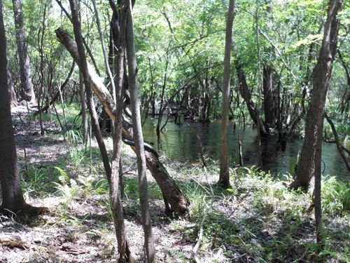 Naturally Wooded Lots Close to : Branford : Suwannee County : Florida