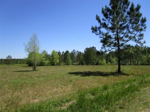 Remote Florida Hunting Land : Bristol : Liberty County : Florida