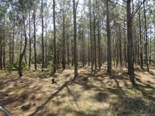 Prime Hunting Property, 46 Acres : Chiefland : Levy County : Florida