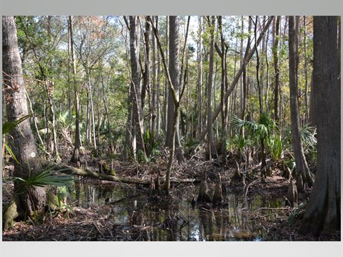 56 Acre Hunting/Recreational : Cedar Key : Levy County : Florida