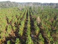 Timber, Recreation, Pasture : Gainesville : Alachua County : Florida