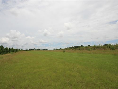 Vacant Farm Land Live Oak, Florida : Live Oak : Suwannee County : Florida