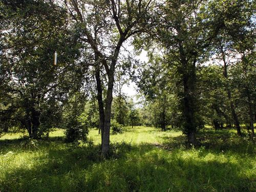 5 Acres For Sale In Live Oak, Fl : Live Oak : Suwannee County : Florida