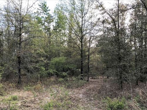 20 Nicely Wooded North Florida : Live Oak : Suwannee County : Florida