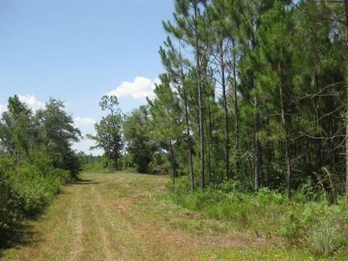 140 Acres Natural North Florida : Mayo : Lafayette County : Florida