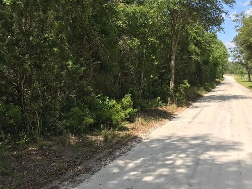 5 Acres in North Florida Country : McAlpin : Suwannee County : Florida