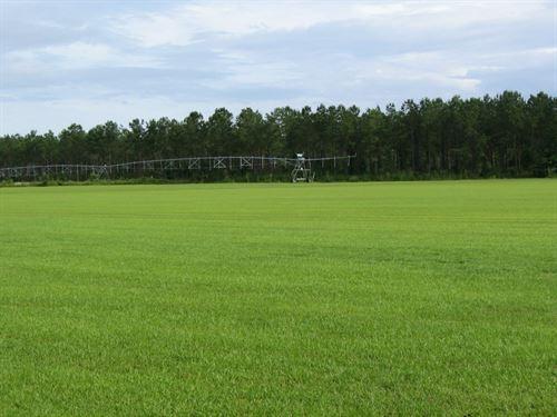 N FL Land, Hunting, Farm, Ranch : Quincy : Gadsden County : Florida