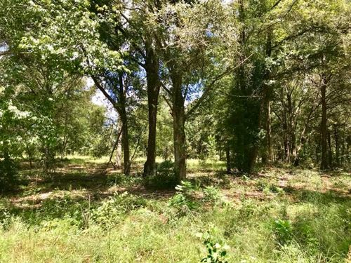 10 Acres O'brien, Suwannee County : O'brien : Suwannee County : Florida