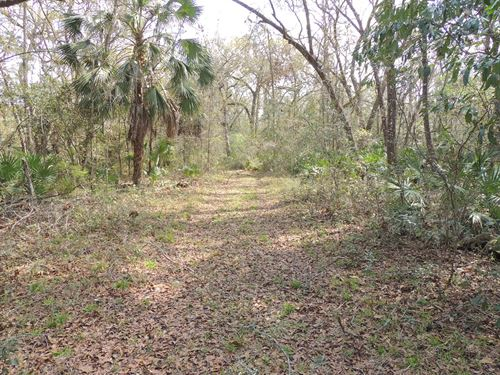 Country Living, Vacant Land, 11 : Old Town : Dixie County : Florida